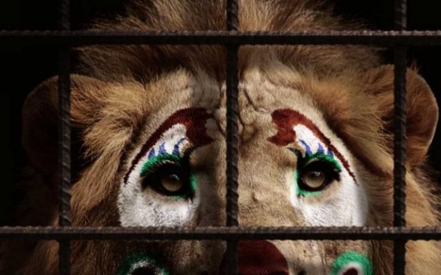 Запорожцы составили петицию о запрете гастролирующих цирков