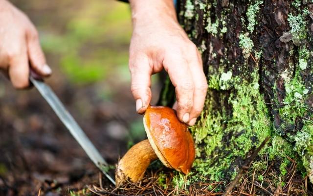 В Запорожской области женщина получила отравление грибами средней тяжести Фото № 0