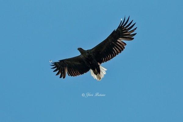 Фотофакт: На Хортице заметили хищную птицу Фото № 3
