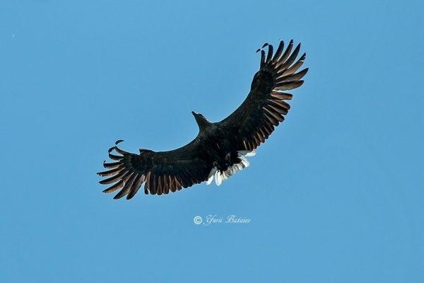 Фотофакт: На Хортице заметили хищную птицу Фото № 2