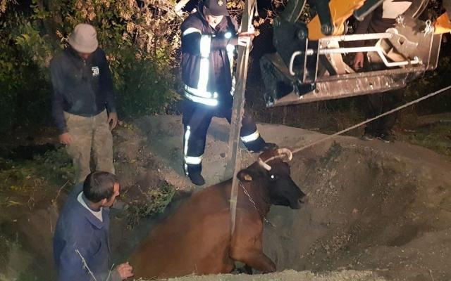 В Запорожской области спасали из ямы корову (ФОТО) Фото № 0