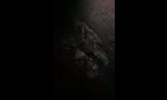 В центре Запорожья нашествие тараканов (ВИДЕО) Фото № 0