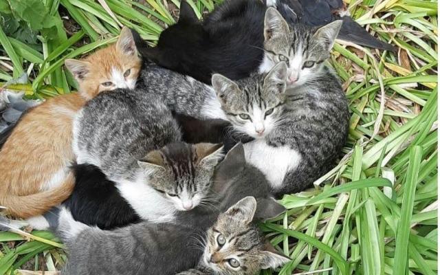 В Запорожье просят помочь котятам, которых запрещают подкармливать (ФОТО) Фото № 0