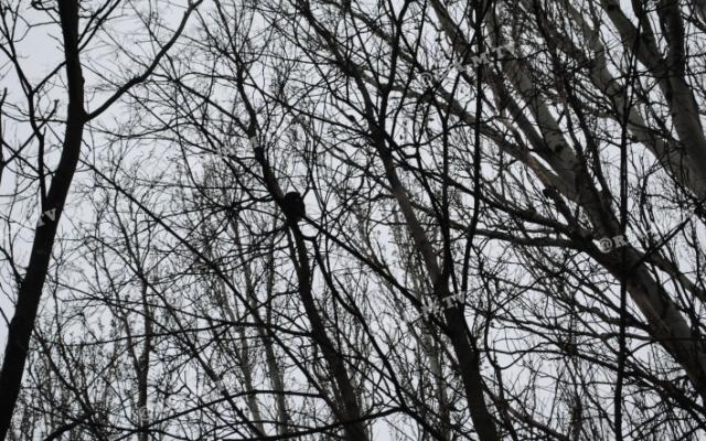 В Запорожской области пытаются спасти истощенное животное, которое сидит в ловушке (ФОТО) Фото № 0
