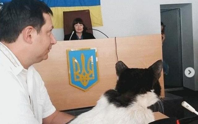 Курьезы: В Запорожье судили кота (ФОТО) Фото № 1