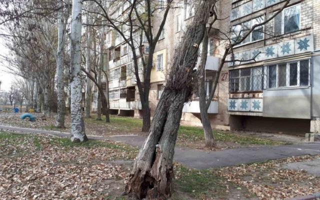 В Мелитополе огромный иссохший тополь упал на многоэтажку Фото № 0