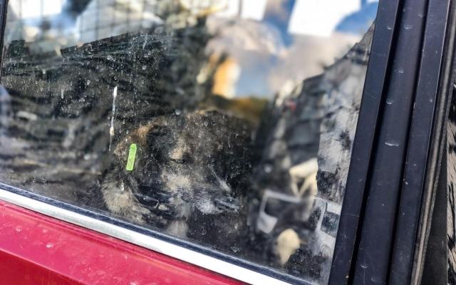 Бердянская защитница животных Валентина Мамай попала в ДТП (ВИДЕО) Фото № 1
