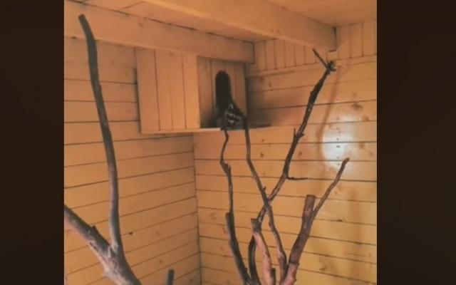 Запорожский зоопарк опубликовал новое забавное видео Фото № 0