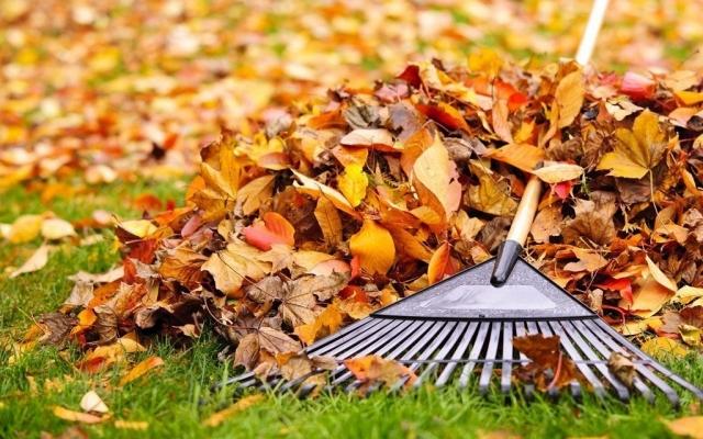 Опавшие листья можно использовать на топливные брикеты и создание бумаги Фото № 0