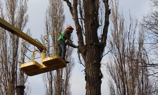 В Заводском районе пилят деревья (ФОТО)