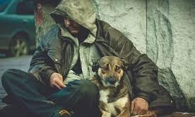 В Запорожской области закрыли приют для бездомных (ВИДЕО)