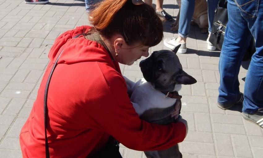 Фотофакт: В Запорожье выбрали лучшую собаку