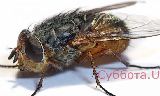 В одной из запорожских пекарен по выпечке бегают насекомые (ФОТО)