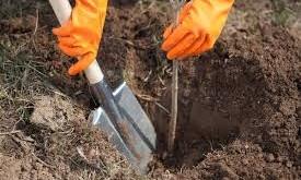 В Запорожье высадили деревья на новой аллее врачей