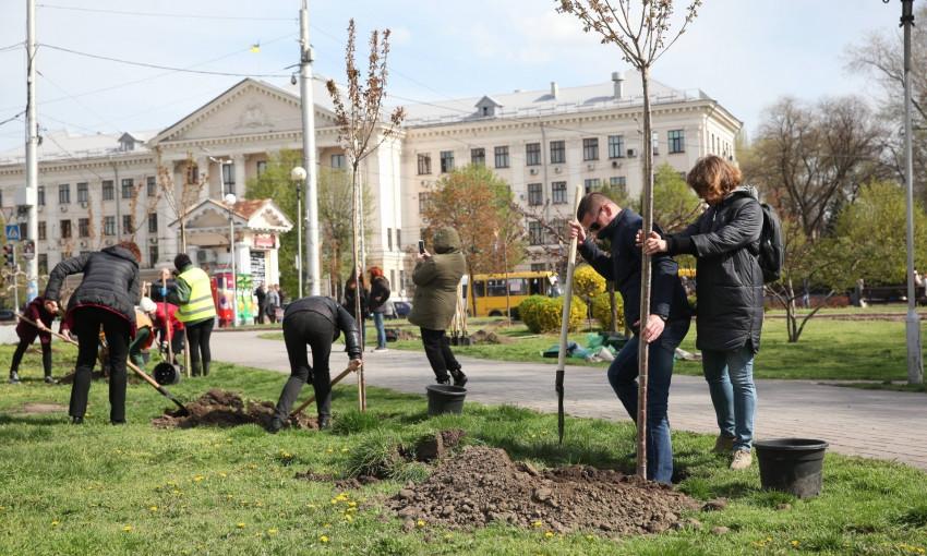В центре Запорожья высадили молодые сакуры (ФОТО)