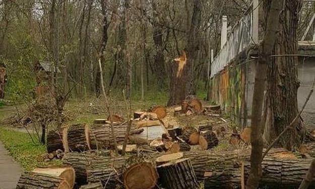 Запорожцы бьют тревогу: На Хортице рубят деревья (ФОТО)