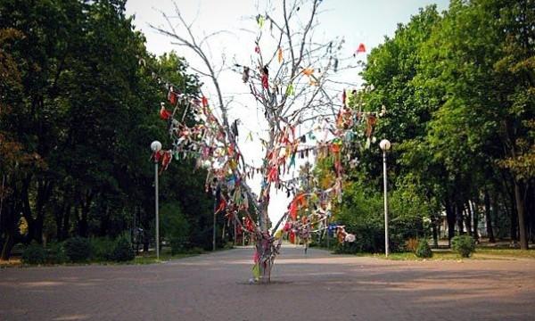 На бульваре Шевченко вырубили деревья (ФОТО)