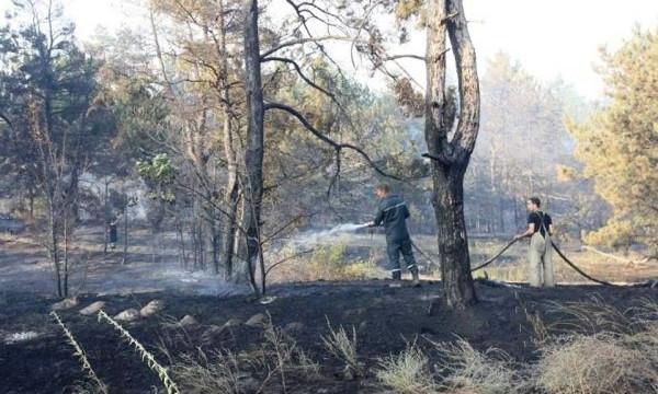 Смотрите: В сети показали карту пожаров на Хортице