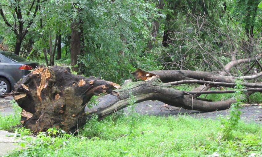 В одном из запорожских дворов рухнуло дерево