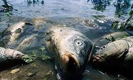В Запорожской области пересох пруд: Погибло 700 килограммов речной рыбы