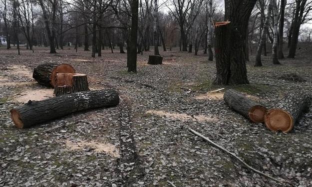 """Почему в """"Дубовке"""" вырубают деревья (ФОТО)"""