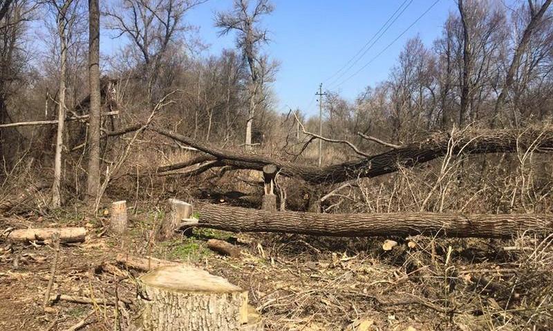 Запорожцы бьют тревогу: В заповедной зоне вырубают десятки деревьев (ФОТО)