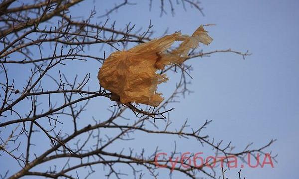 Фотофакт: Под Запорожьем на деревьях висят гирлянды из мусора
