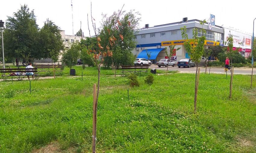 В Запорожской области засохли сакуры (ФОТОФАКТ)