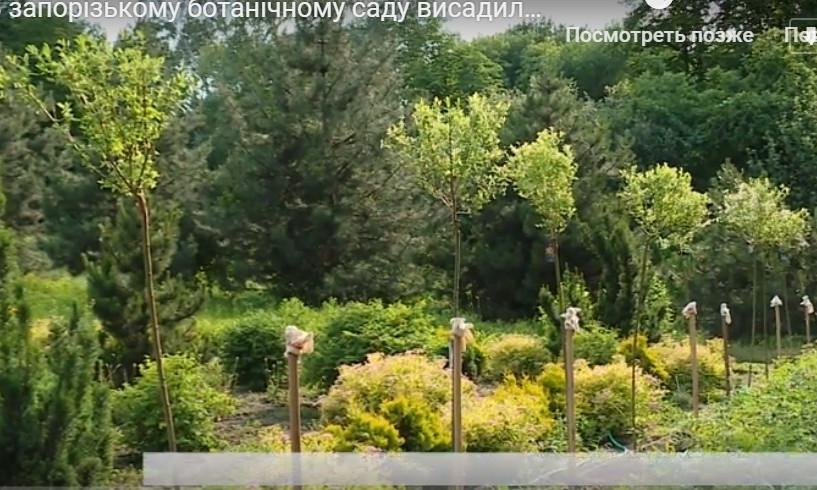 В Запорожье появились уникальные японские деревья (ВИДЕО)